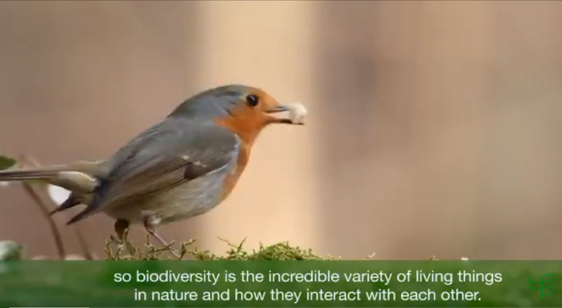 Key Facts About Biodiversity Loss on Earth