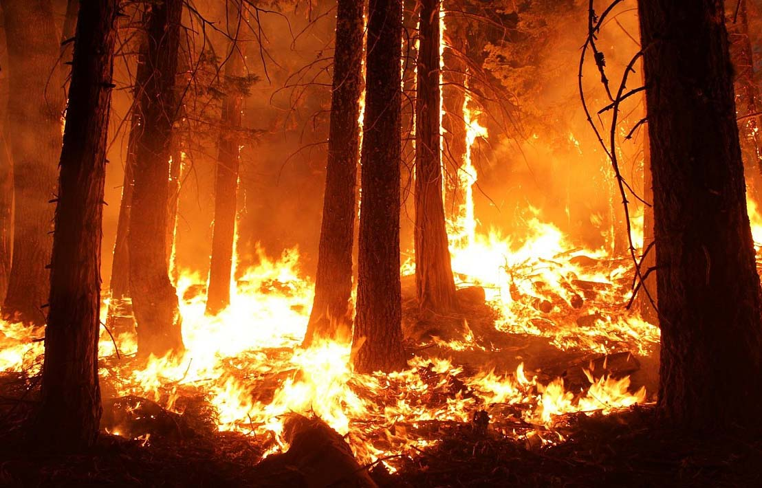 Over 20 Million Hectares Scorched By Wildfires Around the World in 2019